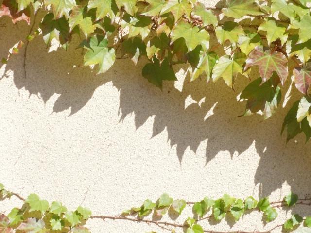 【種類別特徴と費用】視線をシャットアウト!お庭の目隠し設置リフォーム
