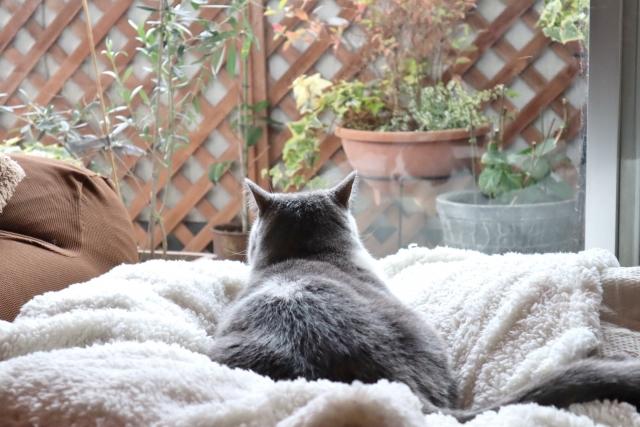 【ペット】猫と幸せに暮らすためのリフォーム事例